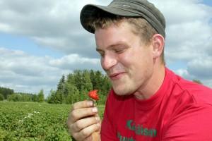 Juha Kärkäinen on mansikkamies jo kolmannessa polvessa. Kuva: Anu Salo