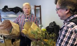 Nämä marihuanakasvustot ovat löytyneet paikallisesta kerrostalosta. Ne päätyvät todisteiksi huumejuttuun, Jari Riiali ja Lassi Harala toteavat. Kuva: Kati Uusitalo