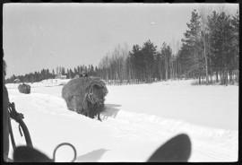 Heinäkuormia ajetaan hevosilla 1930-luvulla Hämeessä. Kuva: Suomen maatalousmuseo Sarka /  Nils Westermarck