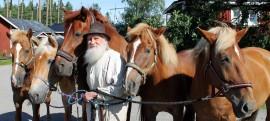 """Kanniston tilalla on hevosia kaikkiaan tusinan verran, mutta tässä 80 vuotta täyttävä Tauno-isäntä on """"oikeiden"""" hevostensa keskellä, siis suomenhevosten. Kali, Porshe, Ruusu, Aija sekä Himpula ovat kaikki rakkaita paijattavia. Kuva: Anu Salo"""