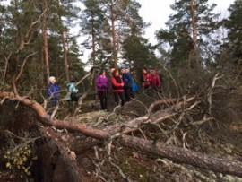 Myrskytuulet olivat kaataneet puita Kurittulassa. Kuva: Sari Kuusinen.