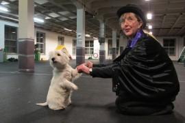 Helena Helanderin ja Lulun koiratanssinumeron teemana on taikuus. Ohjelmassa Lulu seuraa tarkasti Helanderin taikasauvan heilautuksia. Kuva: Kiti Salonen.