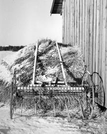 Rekon päivänä ennustettiin heinäsäitä. Kuva: Nils Westermarck / Suomen maatalousmuseo Sarka