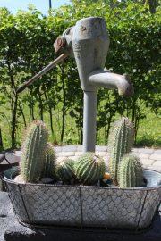 Kaivo ja kaktukset ovat takapihan yksityiskohta. Kuva: Maija Paloposki