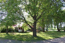 Takapihan suureksi kasvaneet lehtipuut luovat pihalle varjoisaa tunnelmaa. Kuva:Maija Paloposki