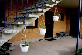 Kranssit ovat amppeleissaan vasta kasvunsa alunsa, mutta pian ne lähtevät kiipeämään pitkin portaikkoa. Kuva: Tiina Naula