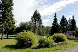 Pihalle tuovat vehreyttä myös puut ja koristepensaat. Kuva: Tiina Naula