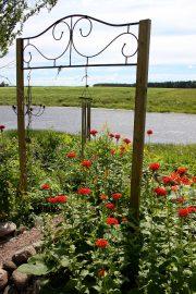 Vanhat, kestävät perennat ovat Koskisten suosikkeja, niiden joukossa muun muassa näyttävästi punaisena kukkiva palavarakkaus. Kuva: Anu Salo