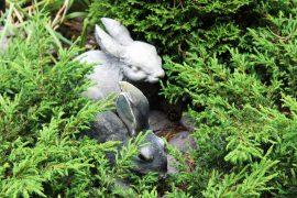 Kanit piilottelevat etupihan muhkeassa istutuksessa. Kuva: Emilia Voltti