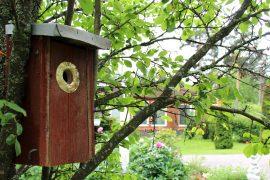 PIHAleikastot linnunpontto2