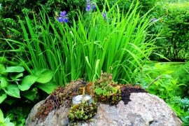Kivet ovat peräisin pihan rakennustyömaalta. Luonnollisen näköinen sammalpeite on kasvatettu piimän avulla. Kuva: Emilia Voltti