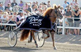 Hullumiestä ohjasti Kuninkuusraveissa Seppo Sarkola, joka myös valmentaa hevosta. Kuva: Tiina Naula