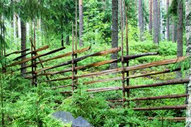 Riukuaita pihan ja metsän reunassa koristaa, mutta samalla myös rajaa pihaa. Kuva: Siiri Jumppanen