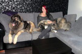 Sohva on lepohetkiä varten, ja myös Kirsi Uusitalon koirat viihtyvät sohvalla. Kuva: Marianne Rovio