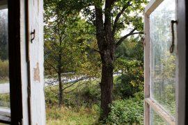 Takapihalla kasvaa iso vanha vaahtera - sellainen, joka koulun pihalla kuuluu ollakin. Kuva: Kiti Salonen