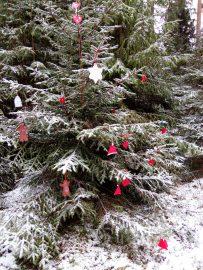 Ollessamme 2.12. kävelylenkillä, huomasin tälläisen joulukuusen urheilukeskuksen metsikössä, urheilukentän ja jäähallin välisen polun varrella.Tekijöistä en tiedä, mutta veikkaisin jotain päiväkotilapsia, tms. Kuva: Juhani Ala-Nissilä