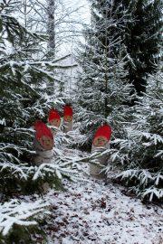 Mökkipihamme monimuotoisuutta Vampulan Kukonharjassa 17.12.2016. Kuva: Armi Kaunisto