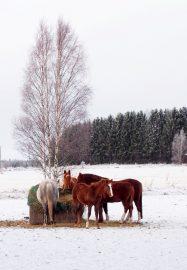Joulu saapuu jokaiselle... Kuva: Marita Lieskivi
