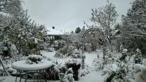 Talvi yllätti puutarhan, naurahtaa Risto Sinervo kuvansa saatetiedoksi. Kuva on otettu Loimaalla 26.10.17 klo 8.30.