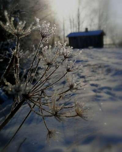 Aija Pietilän kuvassa on huurteinen talviaamu Loimaalla. Kuvausajankohta on helmikuun alku.