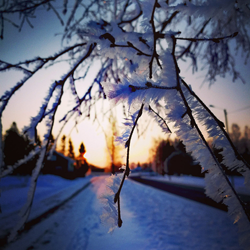 Huurteinen puu työmatkan varrelta, Hirvikoskentieltä, kertoo kuvaaja Aija Pietilä. Kuva on otettu helmikuussa.