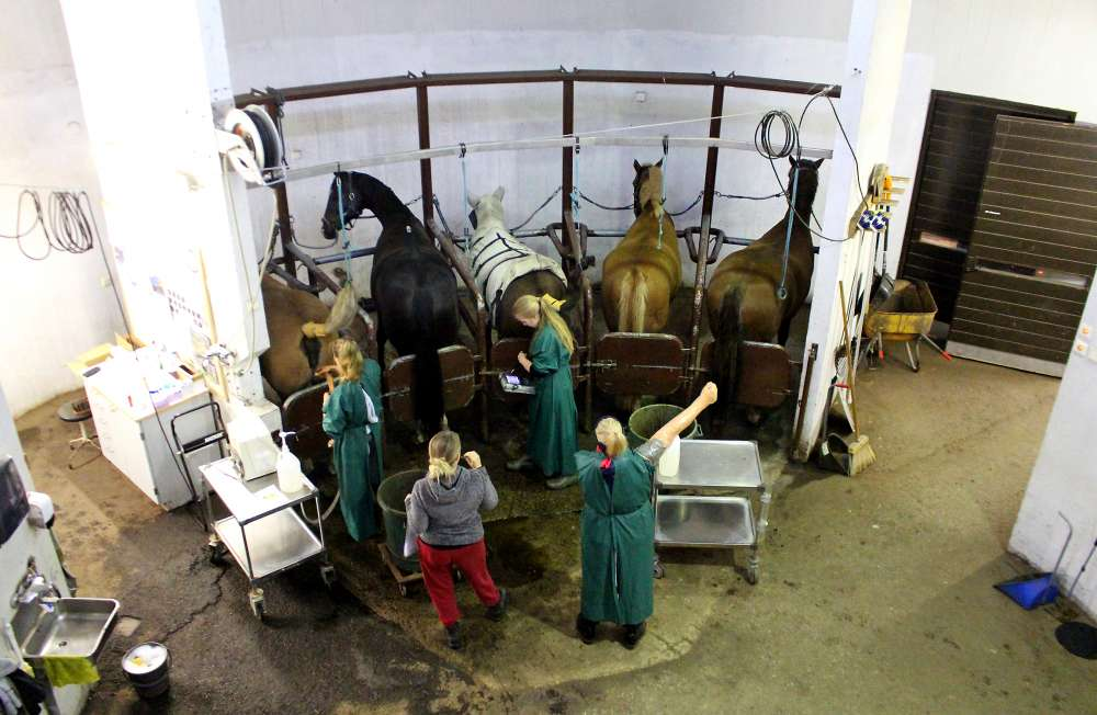Kokeellinen hevostutkimus siirtyy Ypäjältä Jokioisille